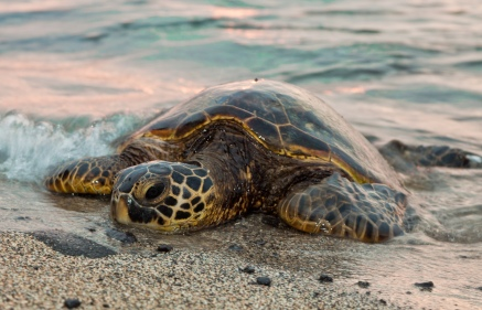 sea turtle_tony northrup_shutterstock